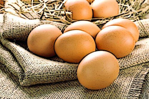 Яйца — лучший источник животного белка