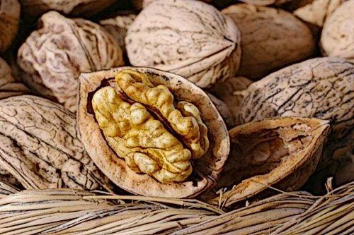 Грецкие орехи очень похожи на мозг человека