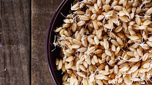 Пророщенный рис